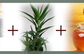Народное средство от всех болезней-мёд-кагор-алоэ, лекарство от, рак, онкология, коронавирус, covid-19, лечение